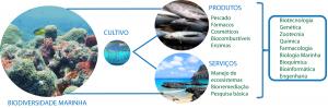 Figura 3 – Abordagem integrada para o uso e aplicações da biodiversidade marinha